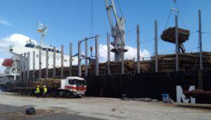 Embarque en Ferrol de 27.000 toneladas de tronco de pino «radiata» gallego con destino a China
